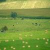 Polyculture élevage étagée – France