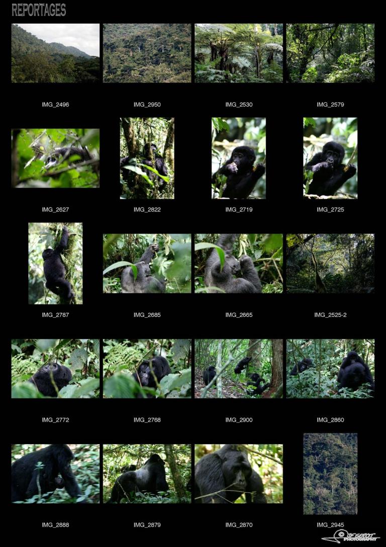 Forêt impénétrable de Bwindi – Ouganda