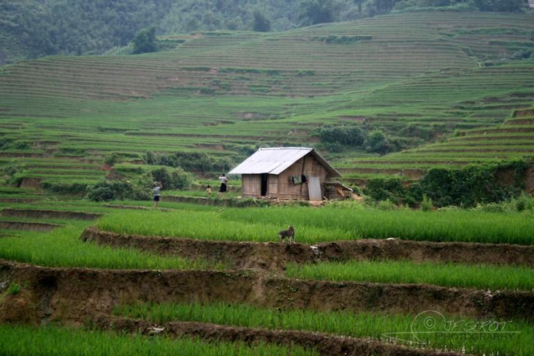 Siège agricole – Viêt Nam