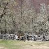 Prairie, clôture et Lichens, Nahuel Huapi – Argentine