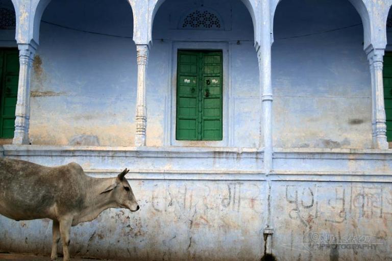 Gardien du temple – Inde