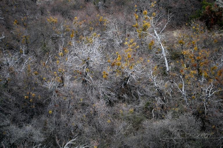 Forêt de Gui, Nahuel Huapi – Argentine