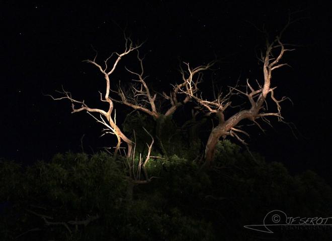Bois de Cerf – France