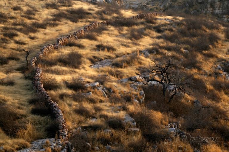 Muret de pierre et arbre mort – Inde