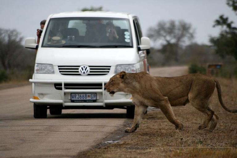 Priorité au piéton – Afrique du Sud
