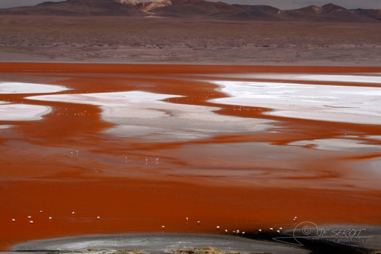 Laguna Colorada, Sud Lipez – Bolivie