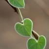Coeur de nature – Zambie