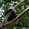 Gibbon à mains blanches 1 / 5