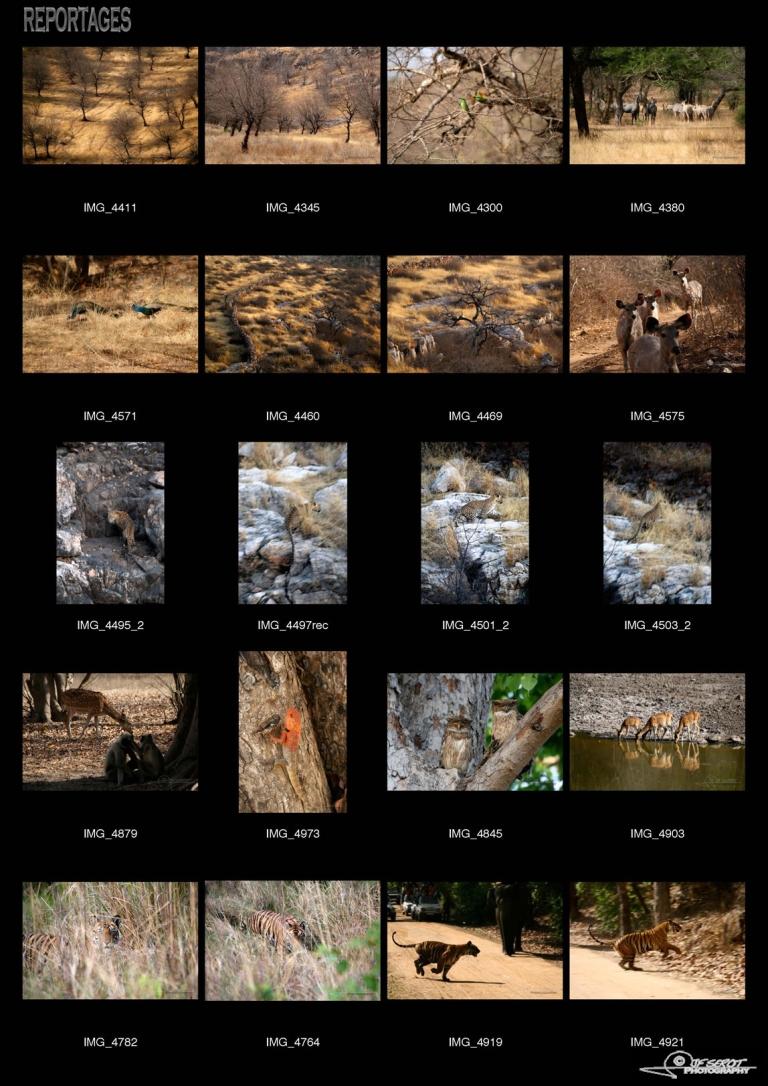 Jungle indienne, Ranthambore – Inde
