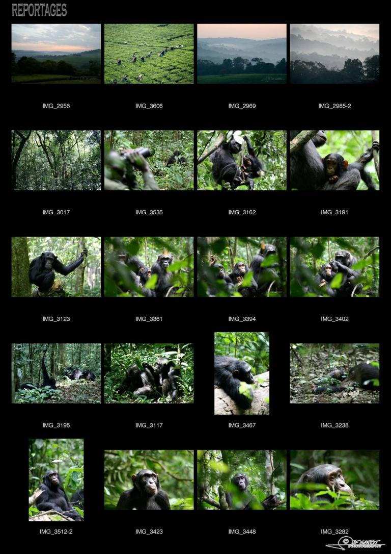 Kibale Forest – Ouganda
