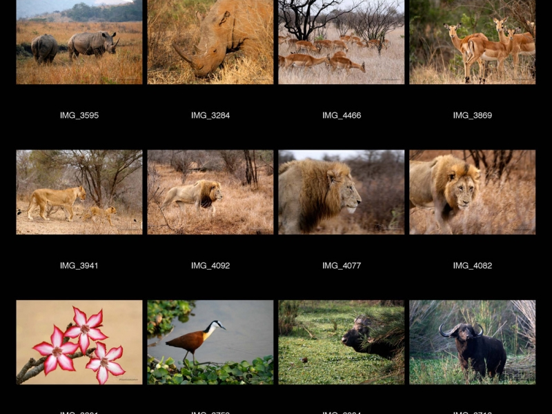 Kruger National Park – Afrique du Sud