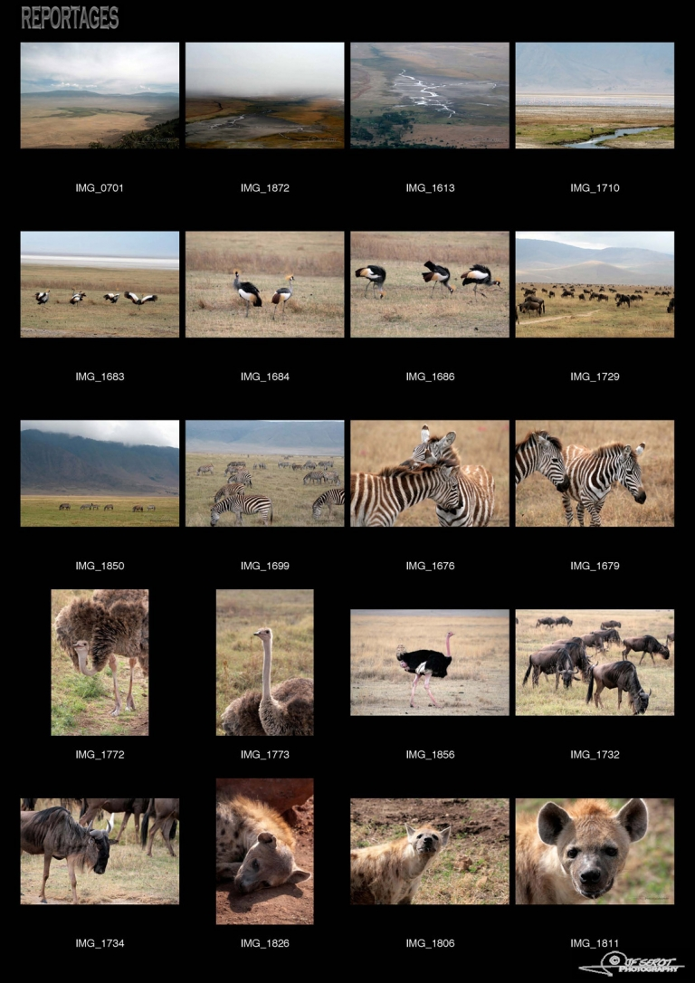 Ngorongoro Crater – Tanzanie