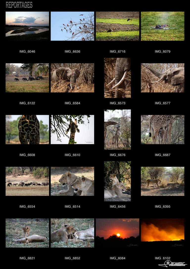 South Luangwa National Park – Zambie