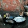 Poussin ou lave-vaisselle – Malawi
