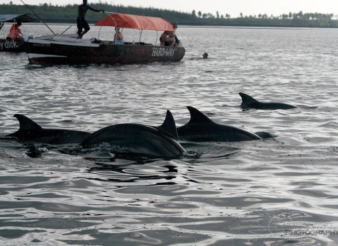 Penser à garder ses distances, Watching Dolphin Tour – Tanzanie