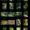 Auke : Un jardin d'Eden au cœur de l'Afrique