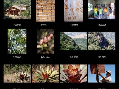 Rodrigues : Protéger la Mata Atlantica en favorisant l'écotourisme
