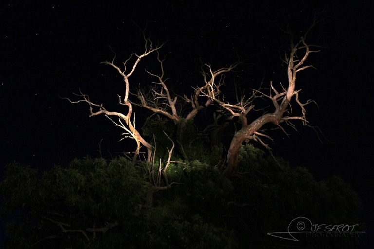 Ambiances nocturnes «nature»