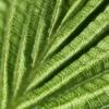 Transparence chlorophyllienne – France