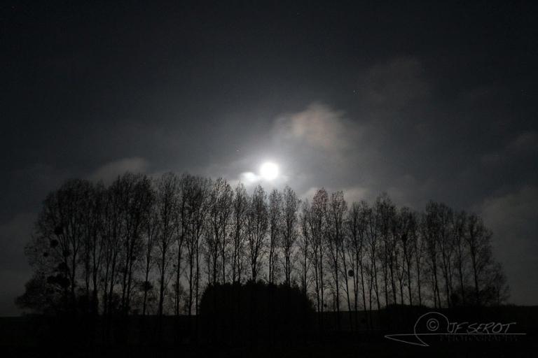 Peupleraie lunaire – France