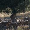 Elevage de mouton, Serra da Estrela – Portugal