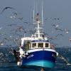 A la pêche, Hoedic – France