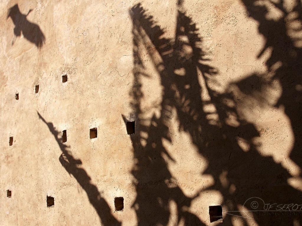 Cigogne blanche en ombre portée – Maroc