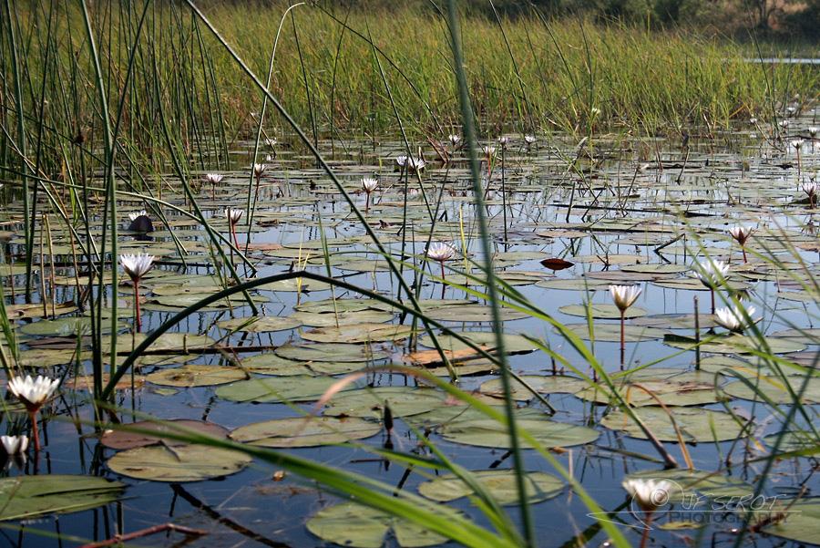 Delta de l'Okavango 2 / 5