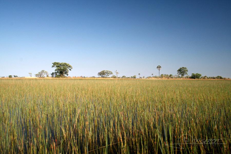 Delta de l'Okavango 1 / 5