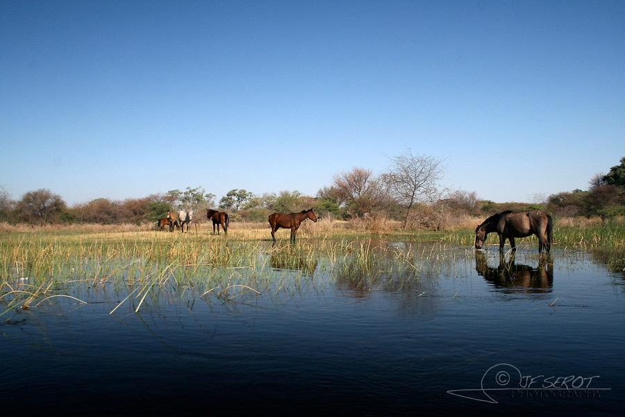 Delta de l'Okavango 5 / 5