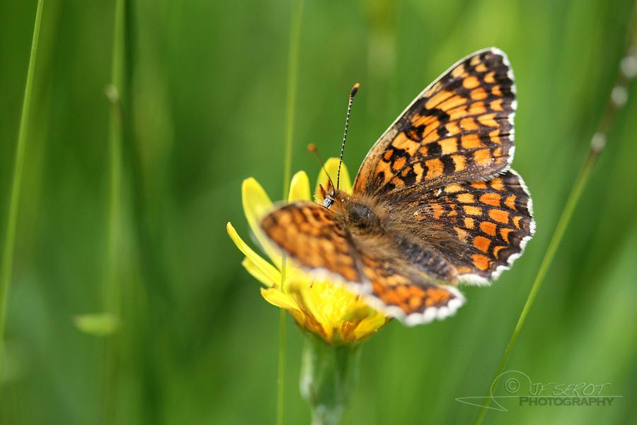 Biodiversité, tout doit disparaître 5 / 22 – NDDL