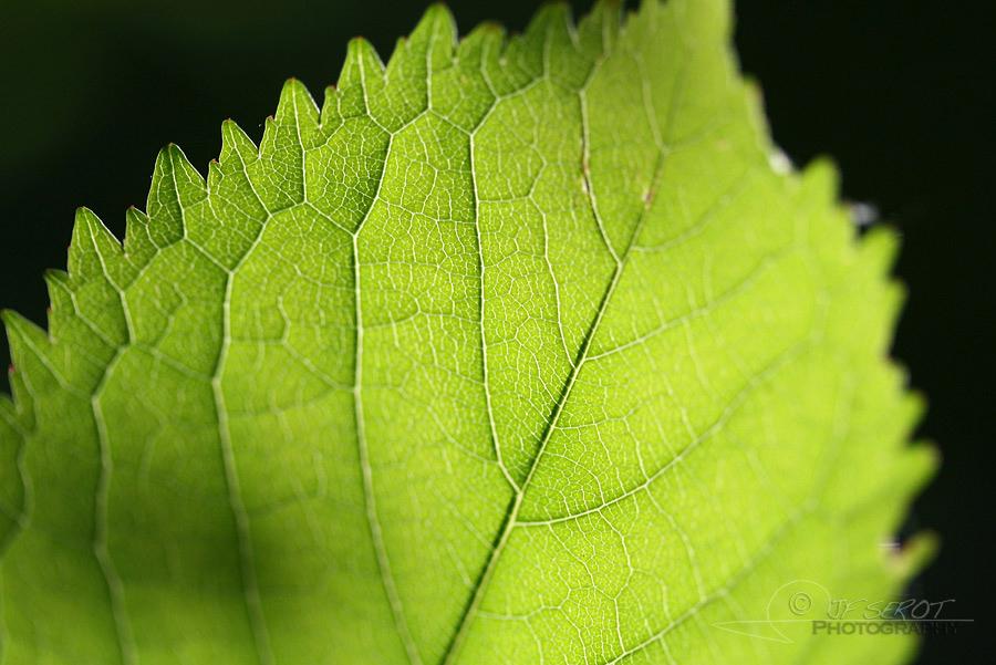 Biodiversité, tout doit disparaître 21 / 22 – NDDL