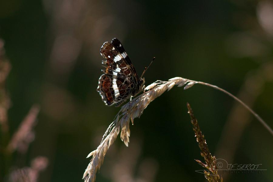 Biodiversité, tout doit disparaître 16 / 22 – NDDL