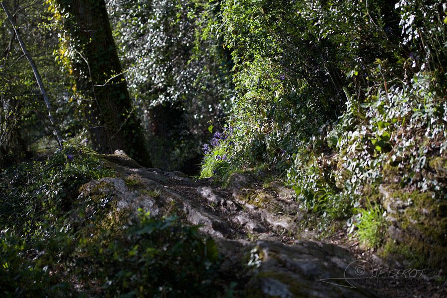 Vallée du Gesvres 11 / 15 – La Chapelle-sur-Erdre