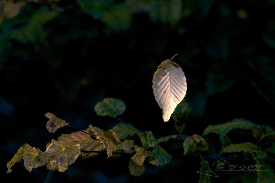 Feuille d'automne – France