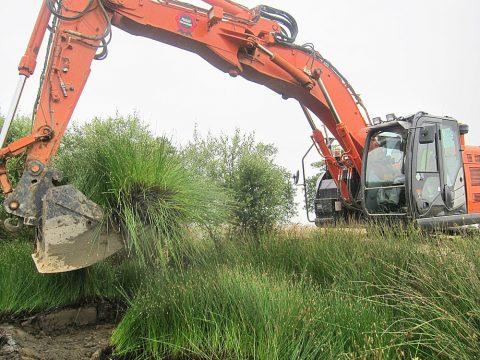 Création d'habitats naturels, restauration de zones humides, etc.