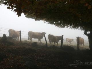 Aubrac en Auvergne – France