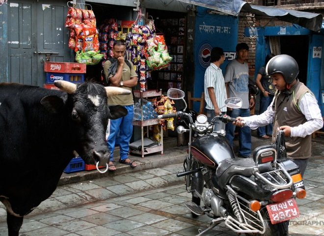 Acheter de la viande – Népal