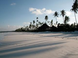 Plage et Palmiers à Zanzibar – Tanzanie