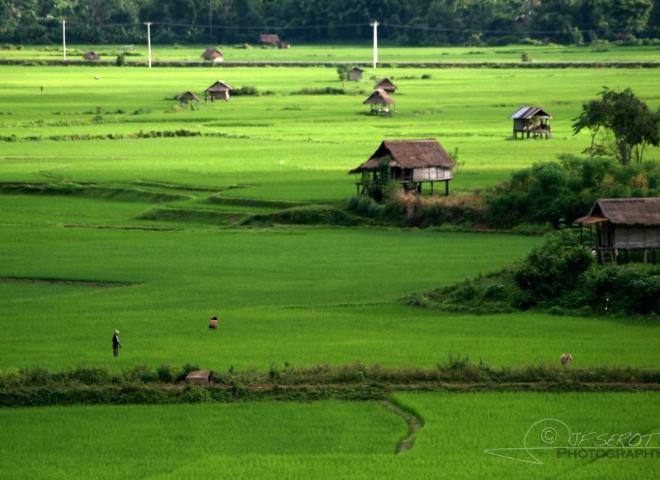 Ruralité laotienne – Laos