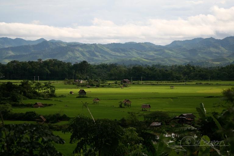 Paysage de rizière – Laos