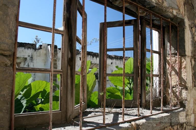Plantes d'intérieur – Guatemala