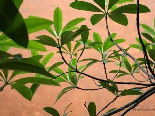 Tree – Viêt Nam