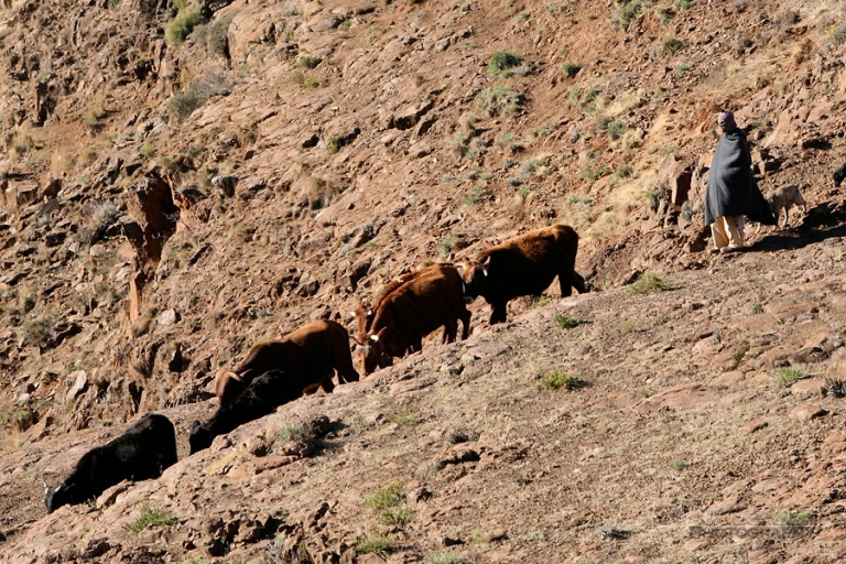 Hold up sur cheptel – Lesotho