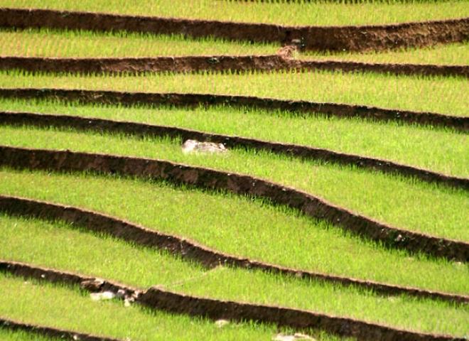 Culture en terrasses – Viêt Nam