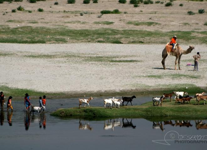 Elevage itinérant – Inde
