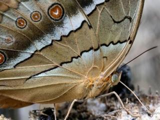 Papillons – Viêt Nam