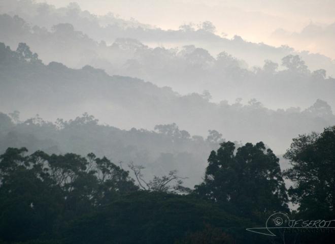 Vallées et brouillard matinale – Ouganda