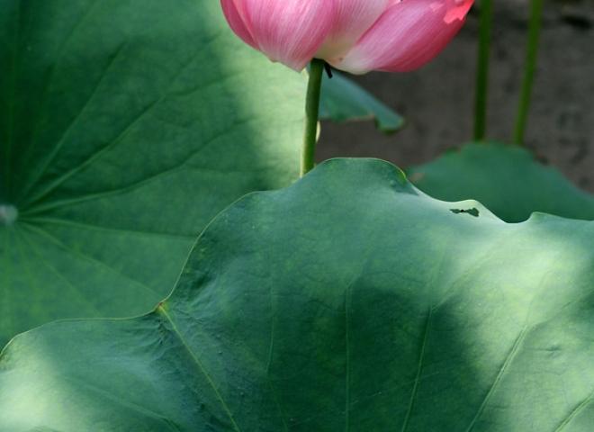 Lotus 3 / 5