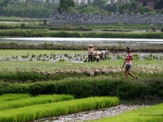 Canards scolaire – Viêt Nam